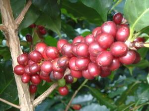 Costa Rica 011